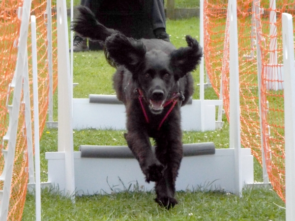 Millie learning the dog flyball outun