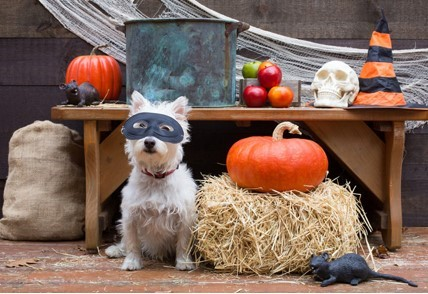 Halloween for dogs – heaven or hell?