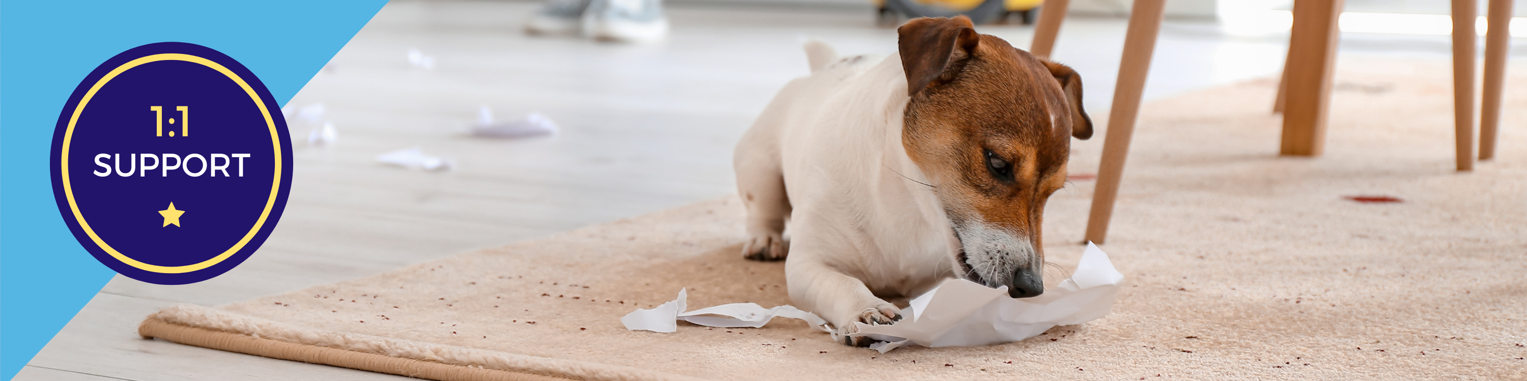 Dog chewing up paper on the floor